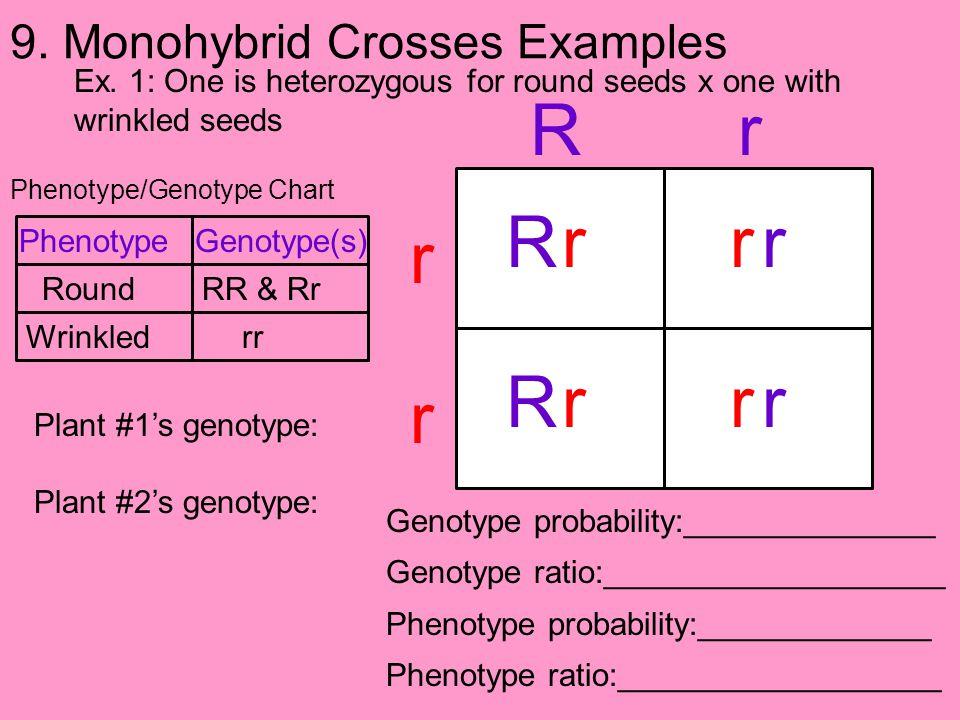 9. Monohybrid Crosses Examples