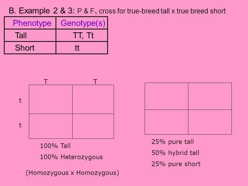 B. Example 2 & 3: P & F1 cross for true-breed tall x true breed short