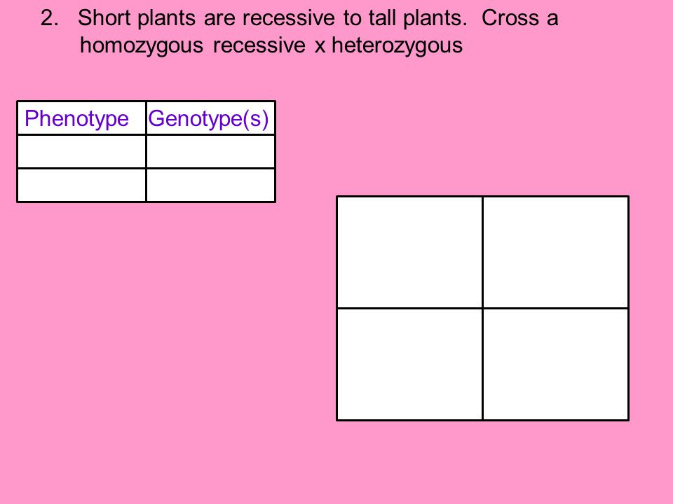 2. Short plants are recessive to tall plants