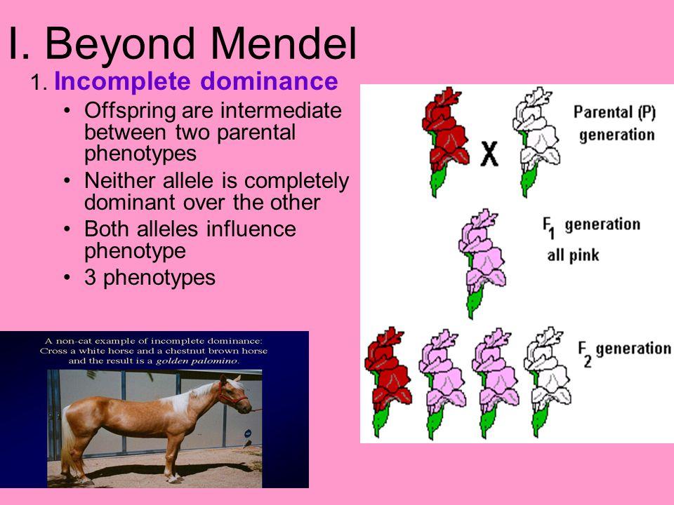 I. Beyond Mendel 1. Incomplete dominance