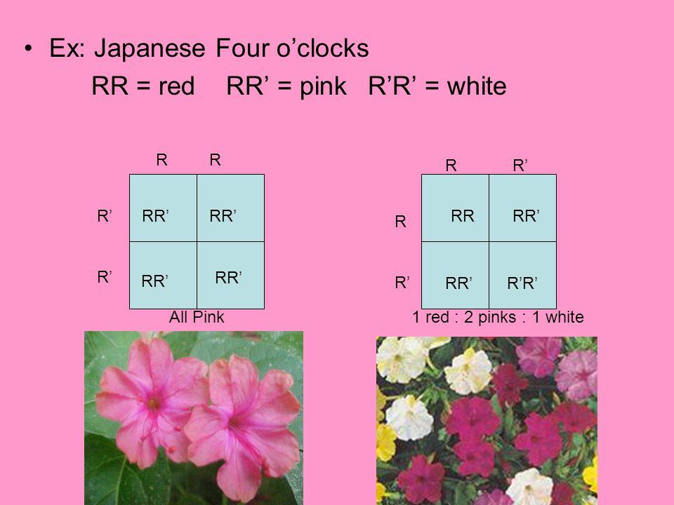 Ex: Japanese Four o'clocks RR = red RR' = pink R'R' = white