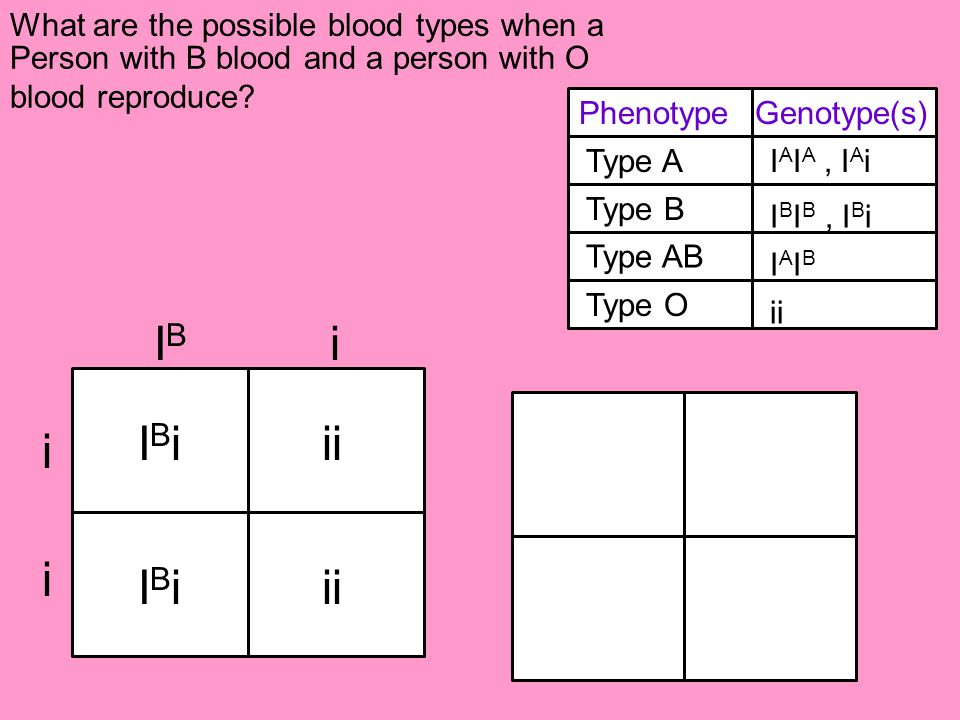 IB i IBi ii i i IBi ii What are the possible blood types when a