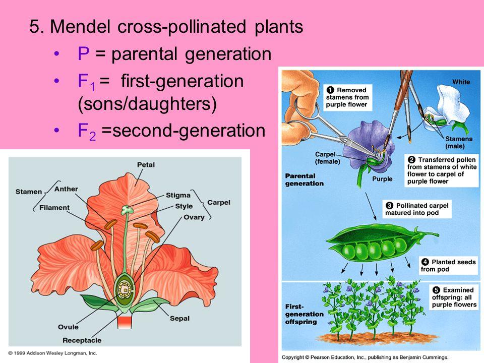 5. Mendel cross-pollinated plants