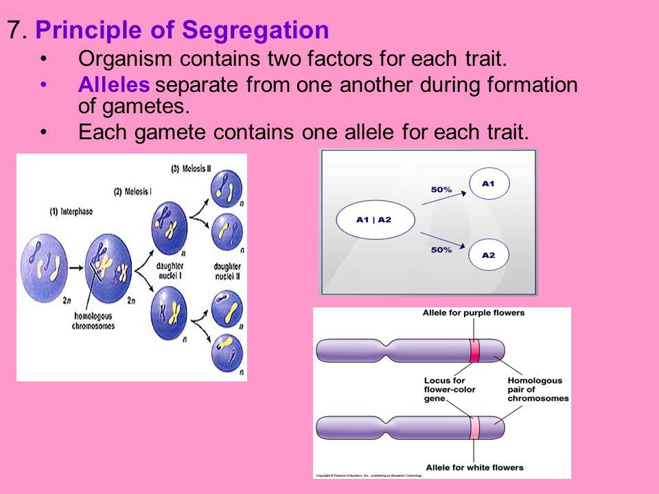 7. Principle of Segregation