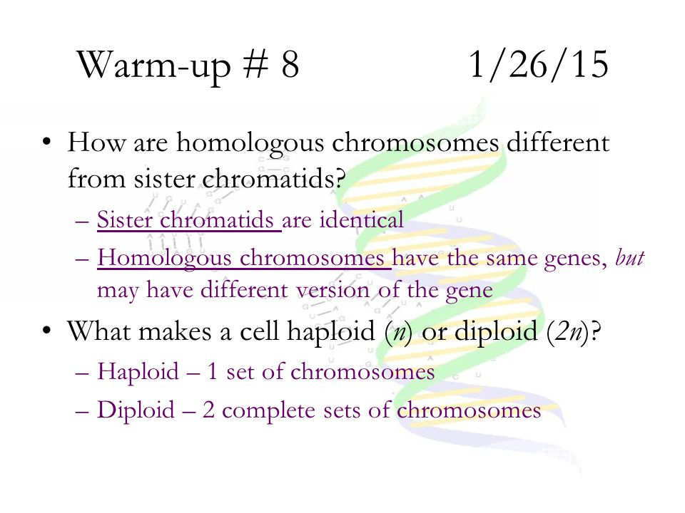 Warm-up # 8 1/26/15 How are homologous chromosomes different from sister chromatids