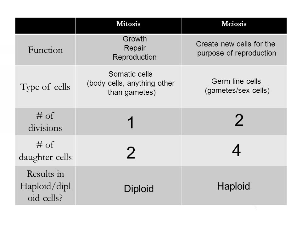2 1 4 2 Function Type of cells # of divisions # of daughter cells
