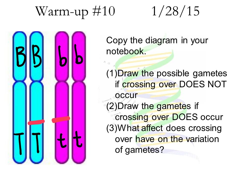 Warm-up #10 1/28/15 Copy the diagram in your notebook.