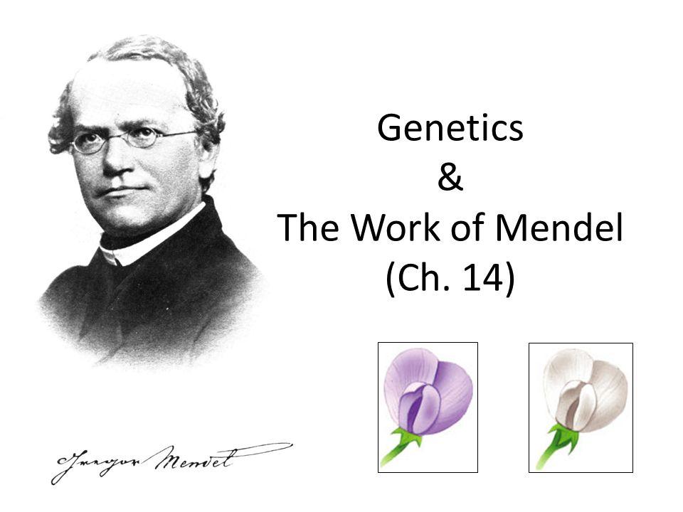 Genetics & The Work of Mendel (Ch. 14)