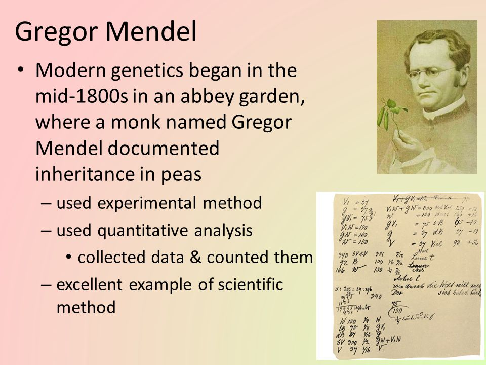 gregor mendel's experiments and the inheritance Chapter 6 gregor mendel and genetics  you will read about mendel's experiments and the secrets of heredity that he discovered  blending theory of inheritance .