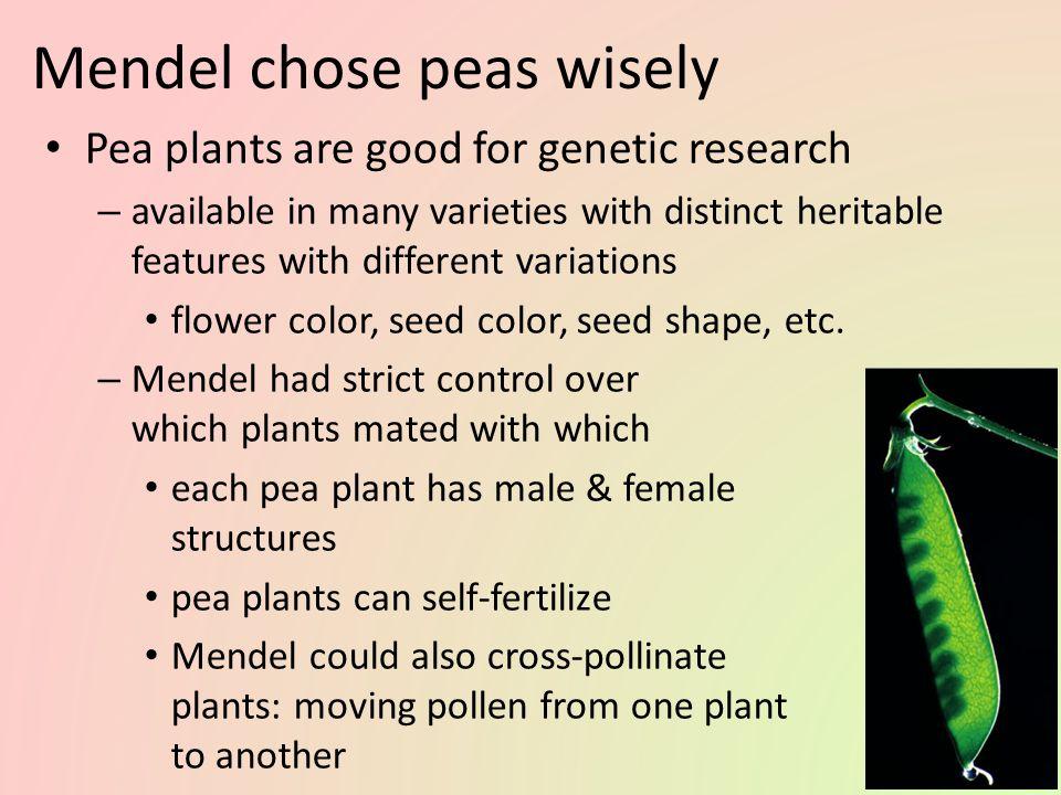 Mendel chose peas wisely
