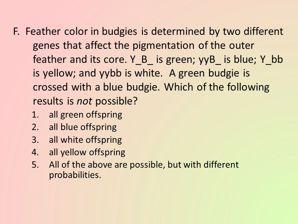 F. Feather color in budgies is determined by two different genes that affect the pigmentation of the outer feather and its core. Y_B_ is green; yyB_ is blue; Y_bb is yellow; and yybb is white. A green budgie is crossed with a blue budgie. Which of the following results is not possible