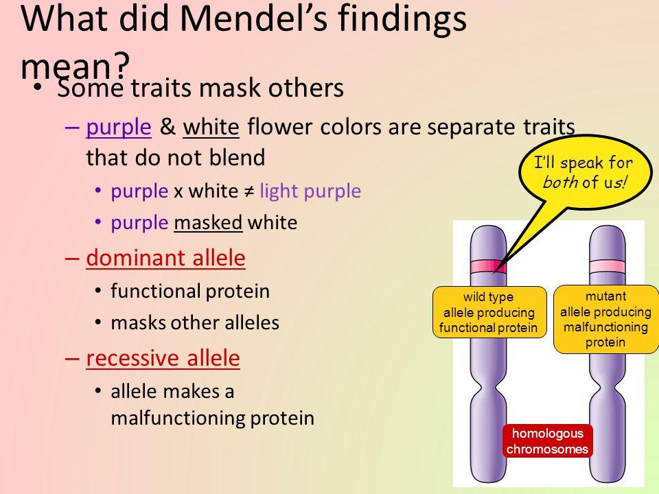 What did Mendel's findings mean