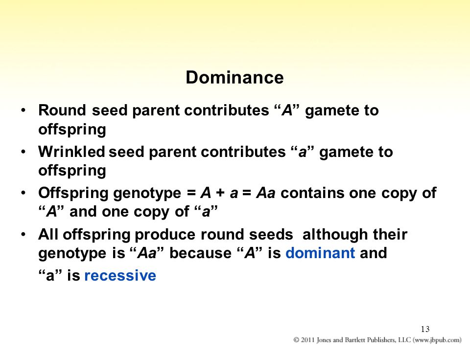 Dominance Round seed parent contributes A gamete to offspring