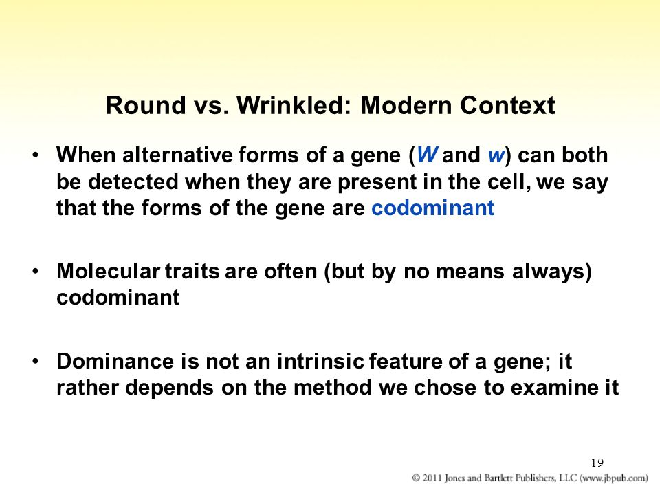 Round vs. Wrinkled: Modern Context