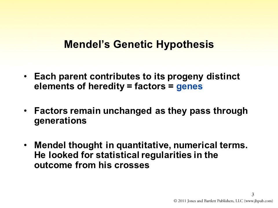 Mendel's Genetic Hypothesis