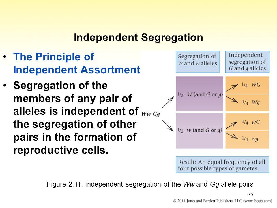 Independent Segregation