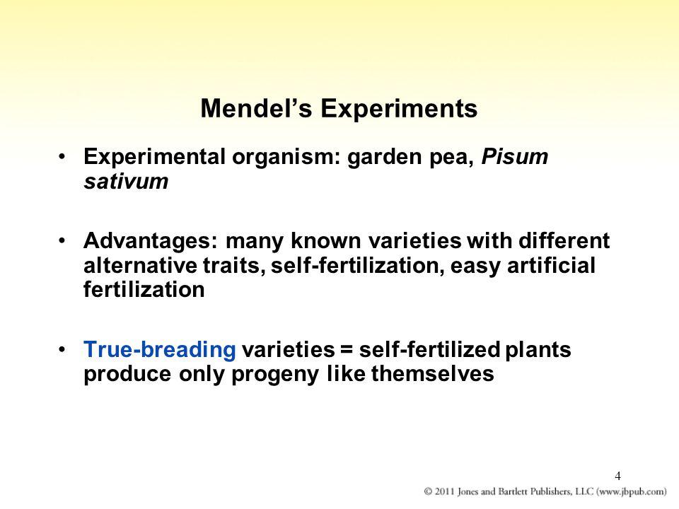 Mendel's Experiments Experimental organism: garden pea, Pisum sativum