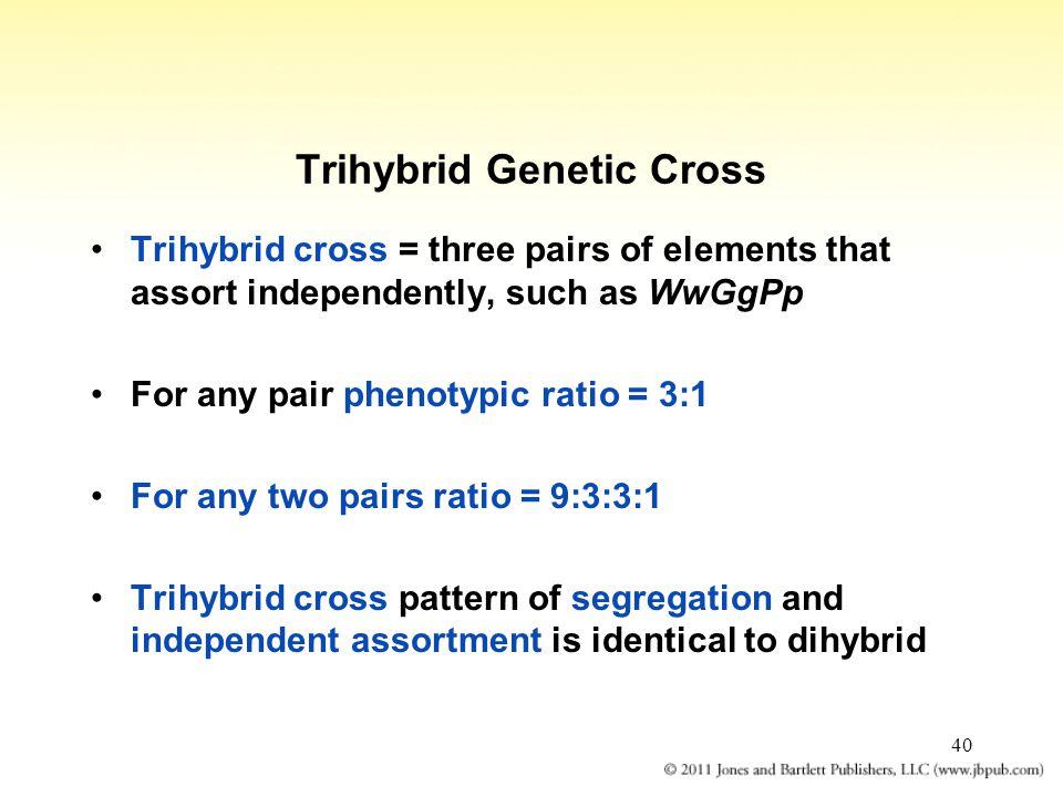 Trihybrid Genetic Cross