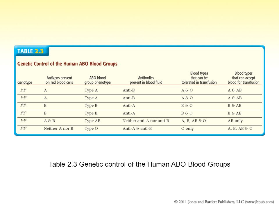 Table 2.3 Genetic control of the Human ABO Blood Groups