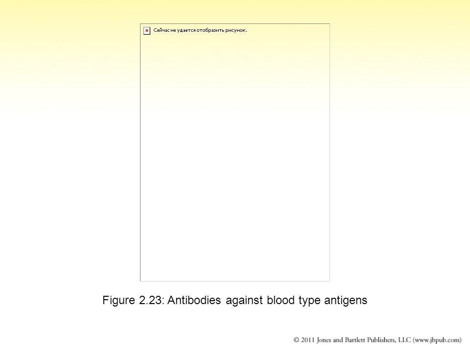 Figure 2.23: Antibodies against blood type antigens