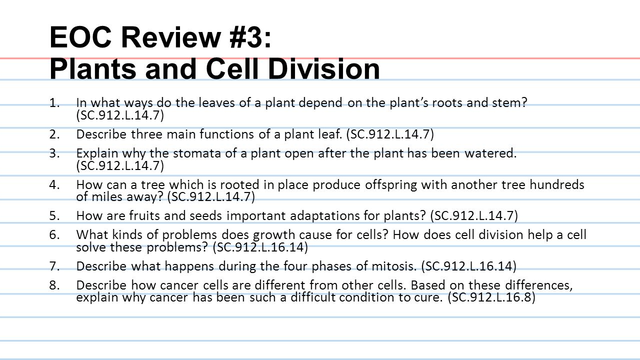EOC Review #3: Plants and Cell Division