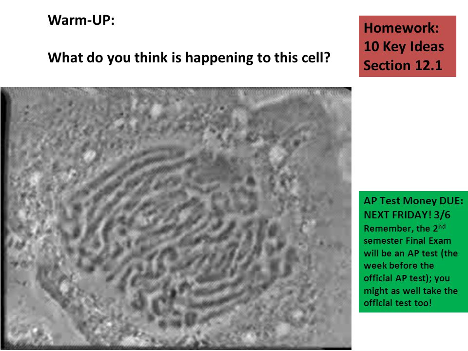 What do you think is happening to this cell Homework: 10 Key Ideas