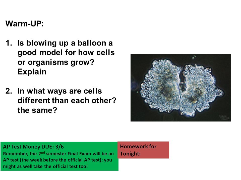 In what ways are cells different than each other the same