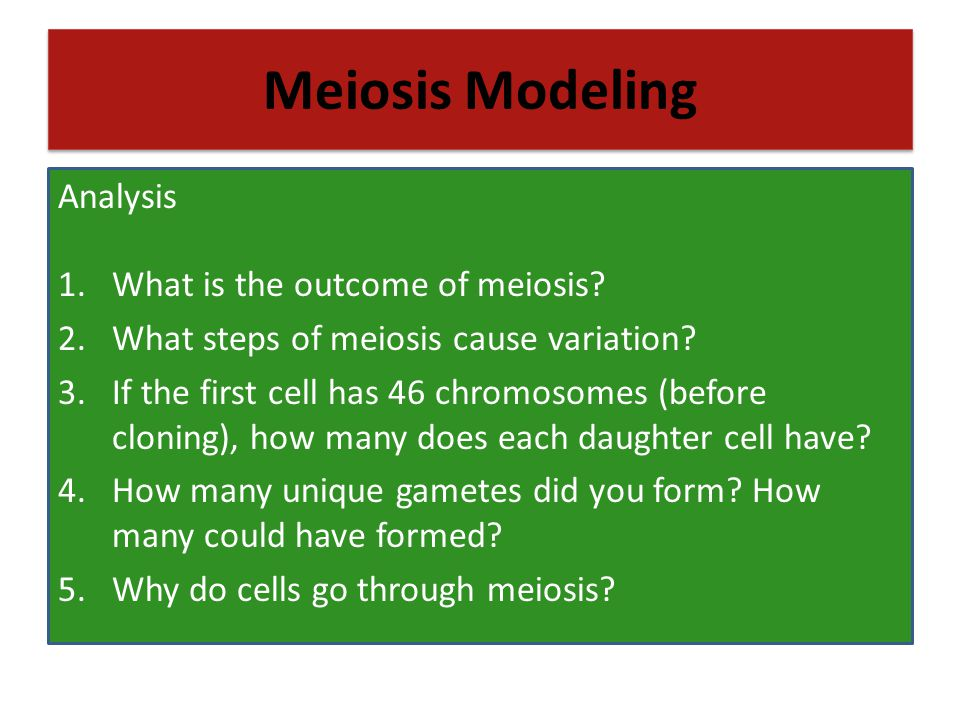 Meiosis Modeling Analysis What is the outcome of meiosis