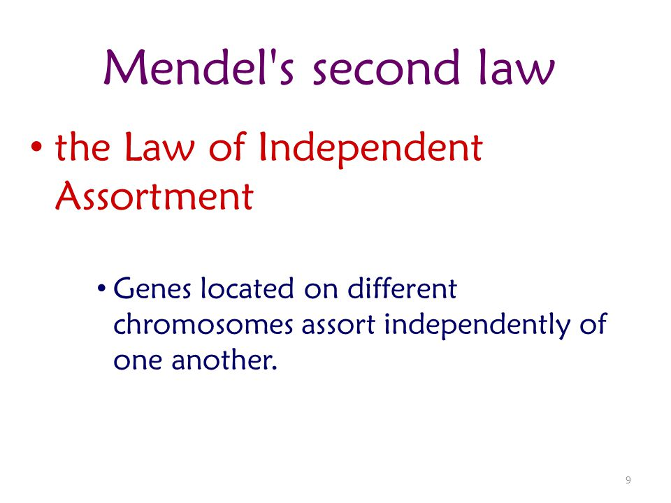 Mendel s second law the Law of Independent Assortment