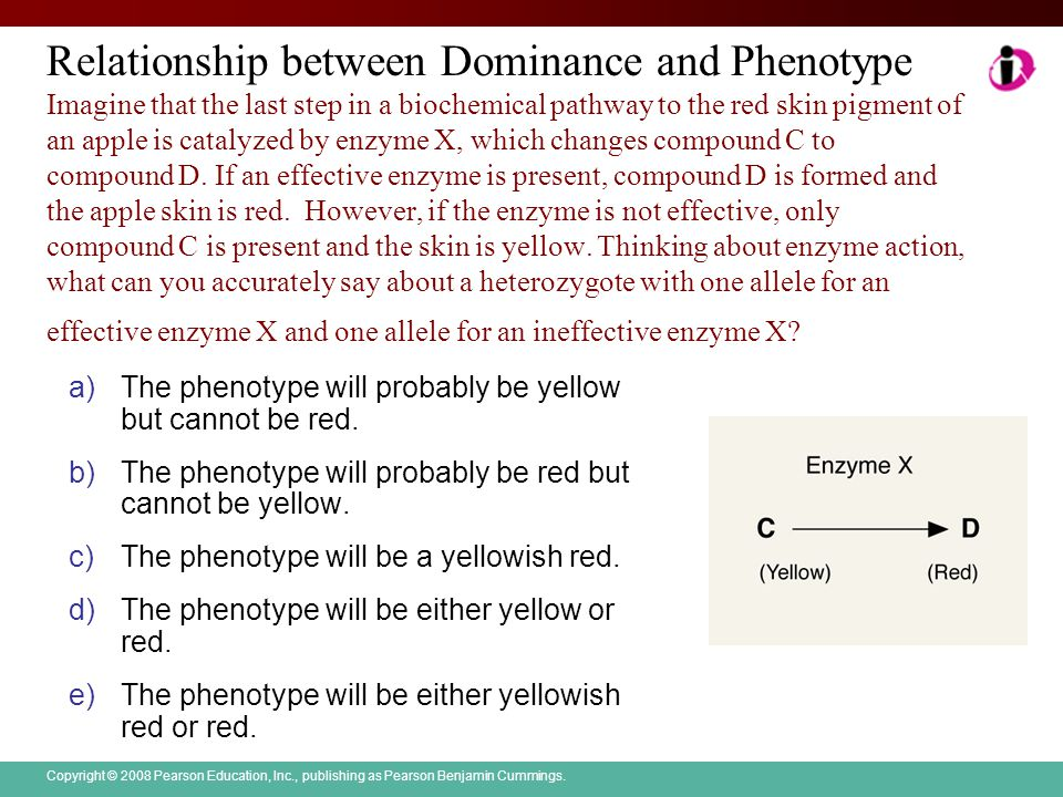 Relationship between Dominance and Phenotype Imagine that the last step in a biochemical pathway to the red skin pigment of an apple is catalyzed by enzyme X, which changes compound C to compound D. If an effective enzyme is present, compound D is formed and the apple skin is red. However, if the enzyme is not effective, only compound C is present and the skin is yellow. Thinking about enzyme action, what can you accurately say about a heterozygote with one allele for an effective enzyme X and one allele for an ineffective enzyme X