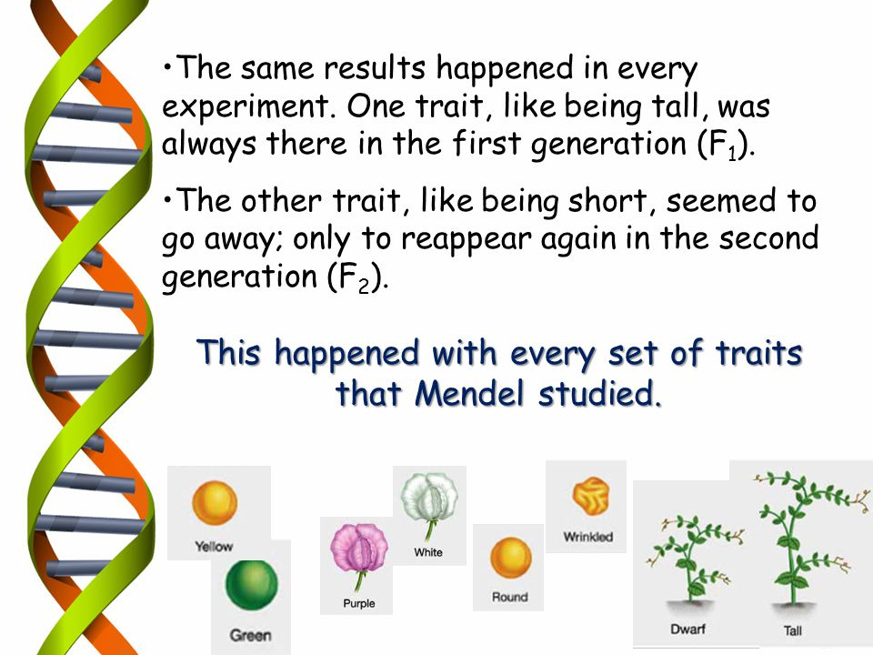 This happened with every set of traits that Mendel studied.
