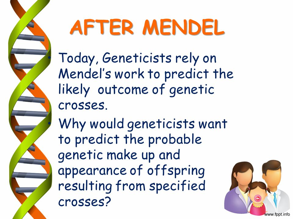 AFTER MENDEL Today, Geneticists rely on Mendel's work to predict the likely outcome of genetic crosses.