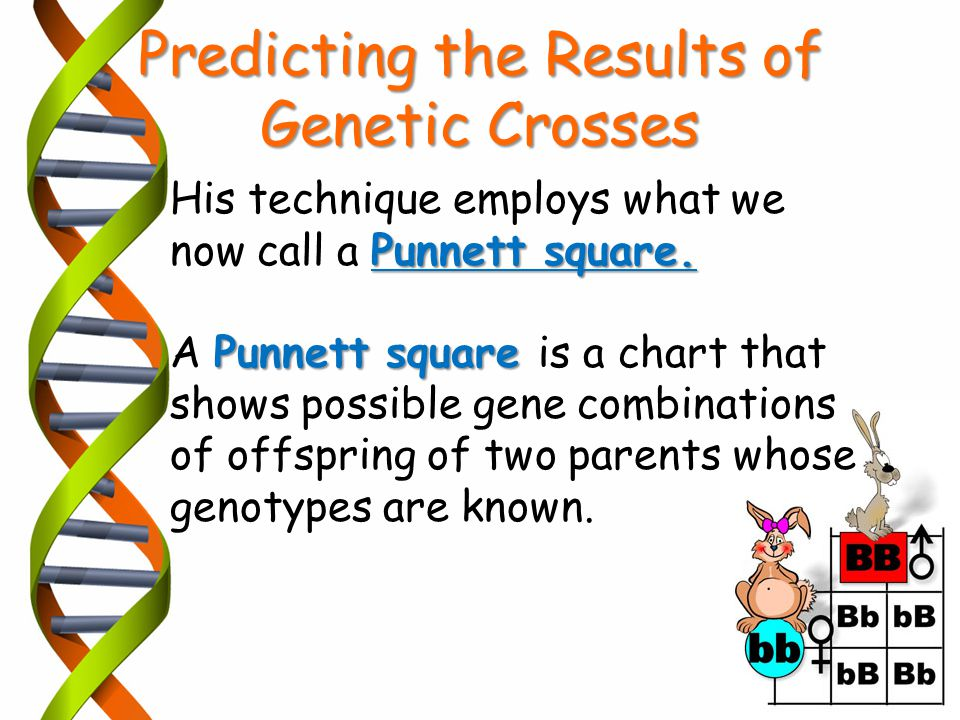 Predicting the Results of Genetic Crosses