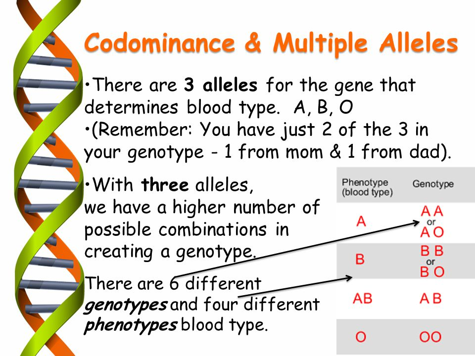 Codominance & Multiple Alleles