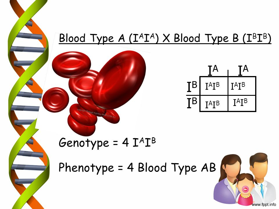 IA IA IB IB Genotype = 4 IAIB Phenotype = 4 Blood Type AB