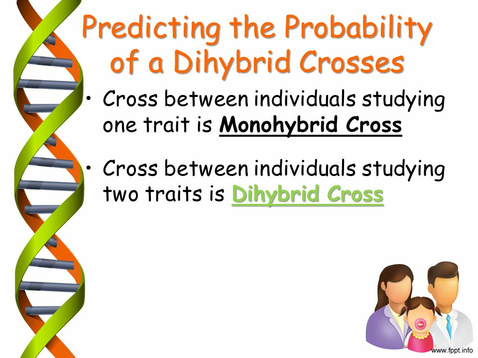 Predicting the Probability of a Dihybrid Crosses