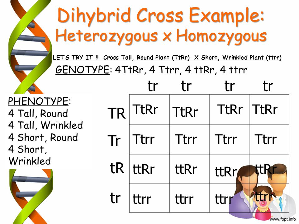 Dihybrid Cross Example: