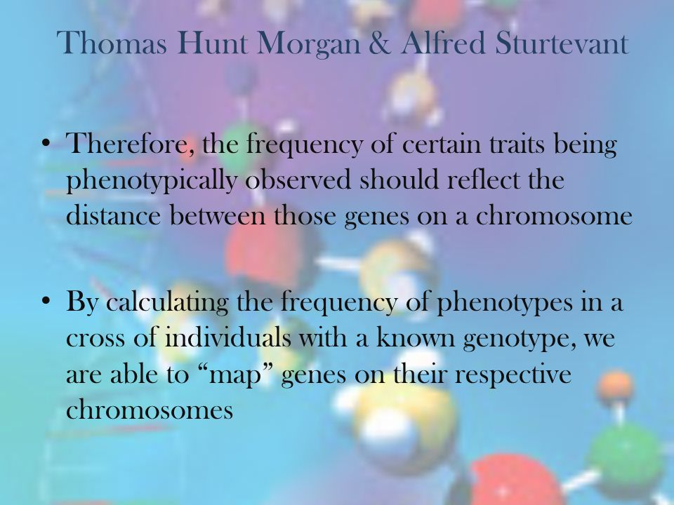 Thomas Hunt Morgan & Alfred Sturtevant