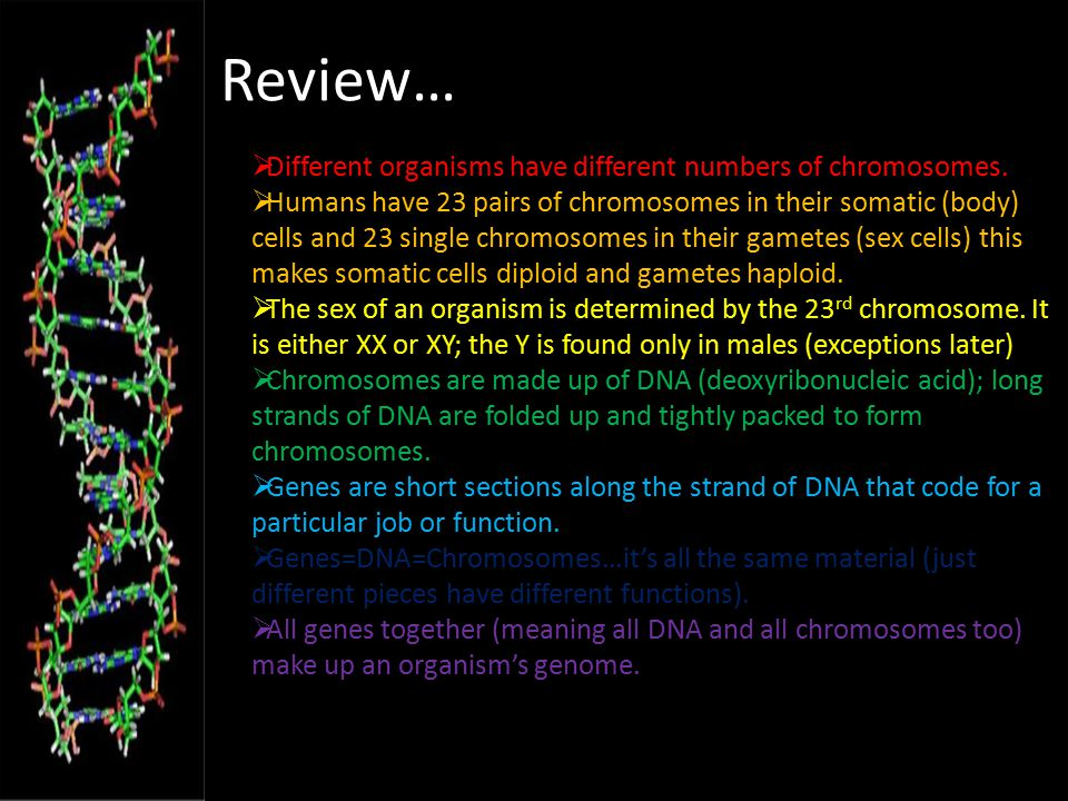 Review… Different organisms have different numbers of chromosomes.
