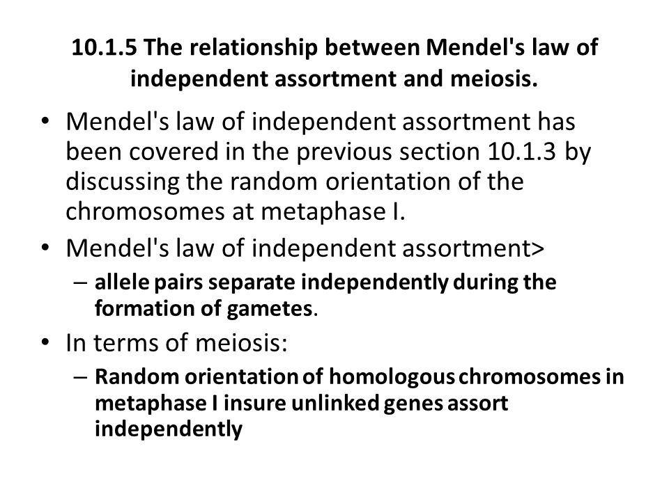 Mendel s law of independent assortment>
