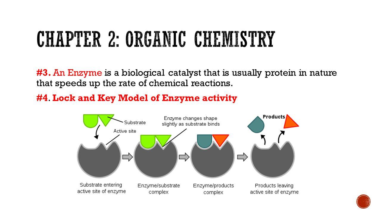 Chapter 2: organic chemistry