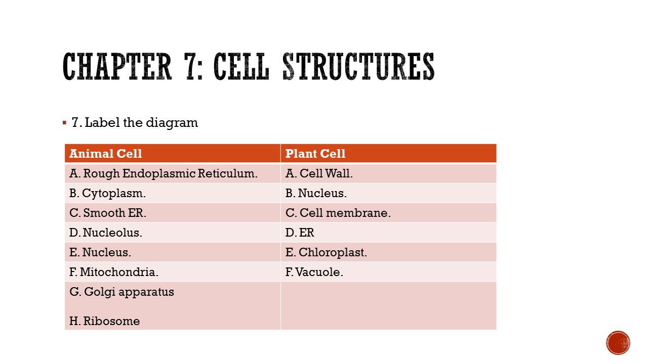 Chapter 7: cell structures
