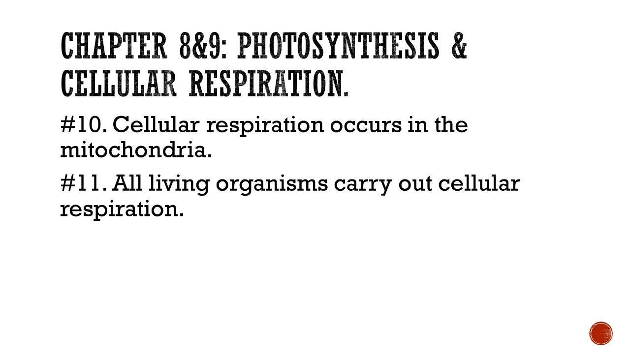 Chapter 8&9: photosynthesis & cellular respiration.