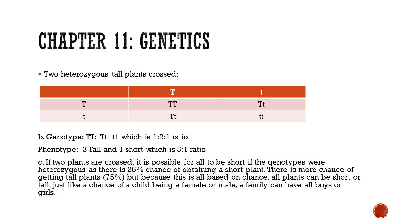 Chapter 11: Genetics Two heterozygous tall plants crossed:
