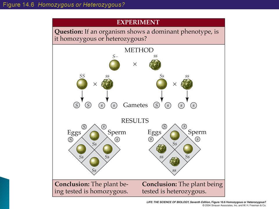 Figure 14.6 Homozygous or Heterozygous