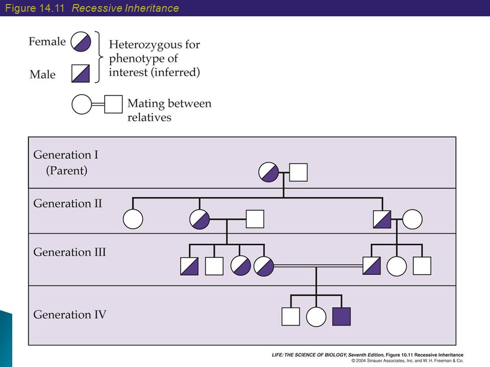 Figure 14.11 Recessive Inheritance