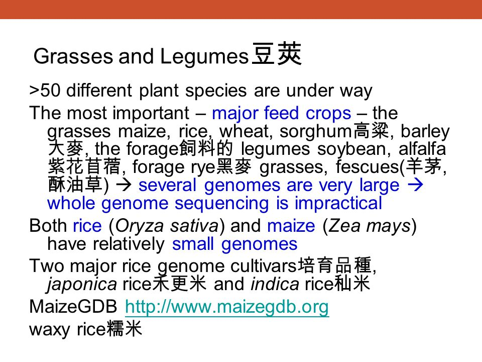 Grasses and Legumes豆莢 >50 different plant species are under way