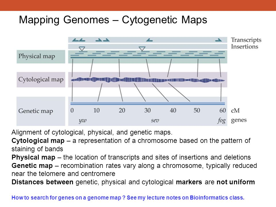 Mapping Genomes – Cytogenetic Maps