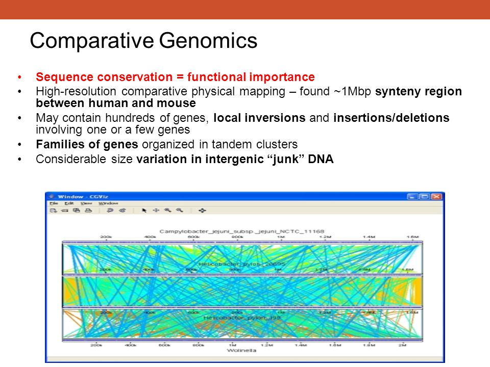 Comparative Genomics Sequence conservation = functional importance