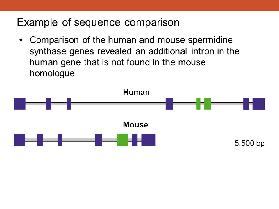 Example of sequence comparison